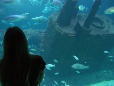 Lisa in front of the Living Shipwreck tank