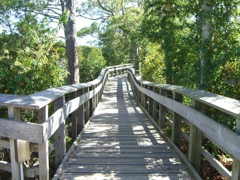 Tidal Marsh Walk